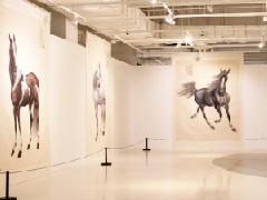 天下行·追梦到天涯——雷晓宁画展今日在京开幕